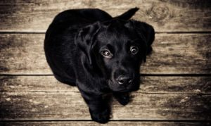 Little black dog