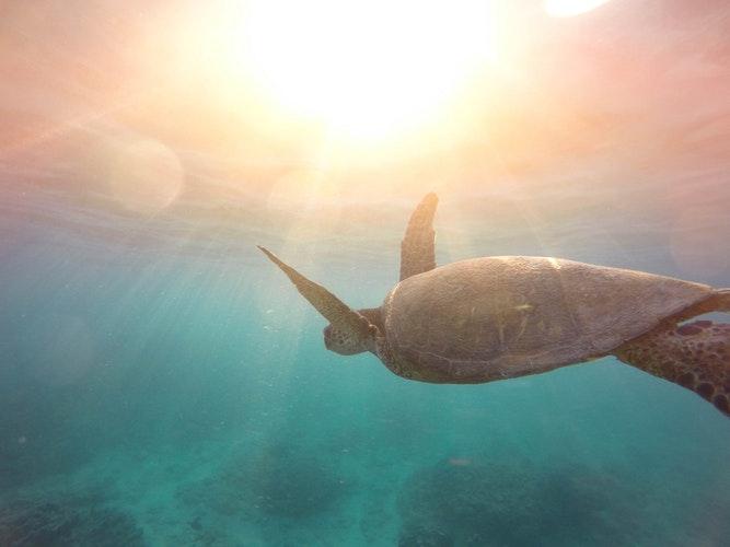 Undersea photo of turtle