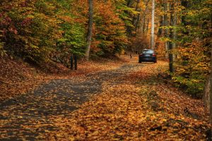 car on the street in the woods covered with leaves in Essex county