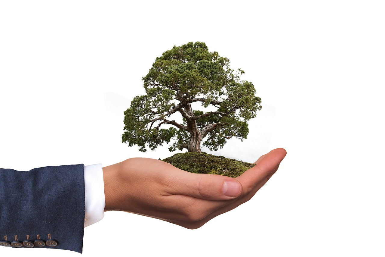 A man in a suit holding a tree in his palm.